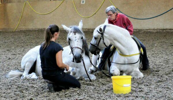 In Bauchlage, mit vier angewinkelten Beinen und erhobenem Hals und Kopf, kann das Pferd Augen, Ohren und Nüstern noch ungehindert nutzen und so Gefahren rechtzeitig entdecken. Die Beine sind unter dem Körper, so daß es gegebenenfalls sofort aufspringen kann