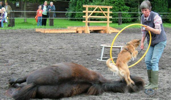 Das Pferd liegt flach auf einer Seite, selbst der Kopf liegt auf dem Boden, die Augen werden oft geschlossen, Hals und Beine sind ausgestreckt, alle Muskeln sind entspannt.